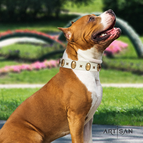 Amstaff decorated genuine leather dog collar for everyday use