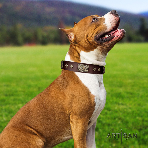 Amstaff handy use full grain genuine leather dog collar with studs