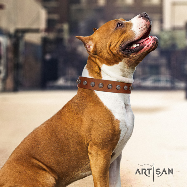 Amstaff unique full grain genuine leather dog collar for fancy walking