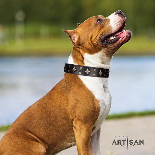Amstaff stylish design genuine leather dog collar with embellishments for comfy wearing