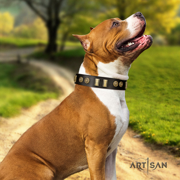Amstaff handy use full grain leather dog collar with adornments