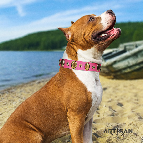 Amstaff amazing full grain natural leather dog collar for everyday use