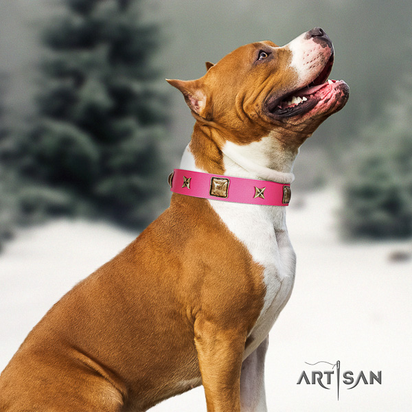 Amstaff designer full grain natural leather dog collar for daily walking