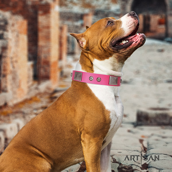 Amstaff incredible genuine leather dog collar for basic training