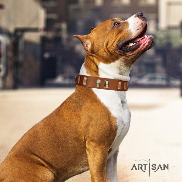 Amstaff unusual full grain natural leather dog collar for walking