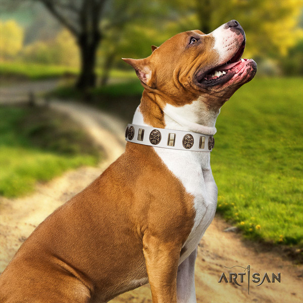 Amstaff handmade leather dog collar for everyday walking