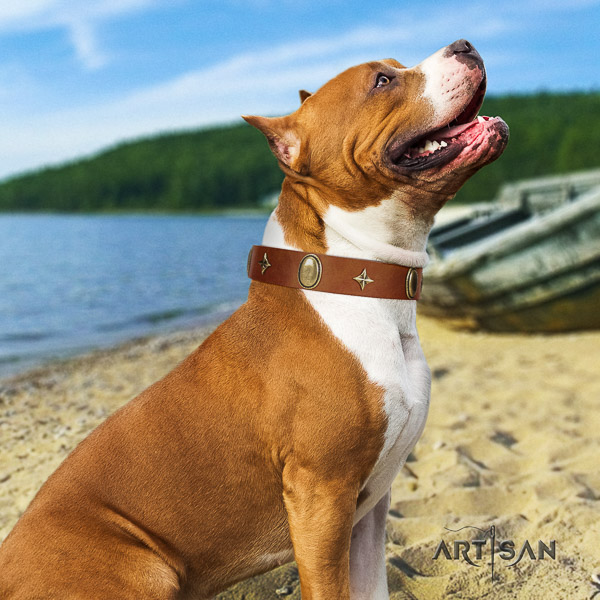 Amstaff amazing full grain genuine leather dog collar for daily use