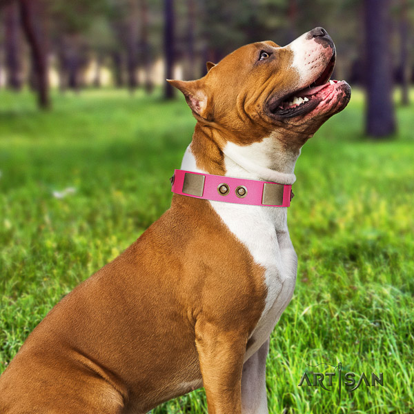 Amstaff exquisite natural genuine leather dog collar for easy wearing