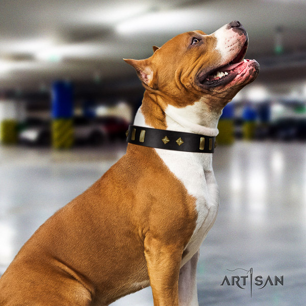 Amstaff significant leather dog collar for comfortable wearing