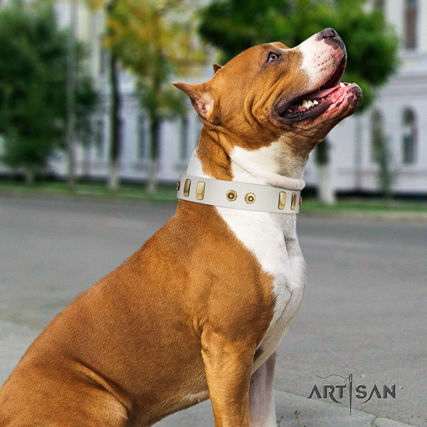 Amstaff fine quality genuine leather dog collar for daily use
