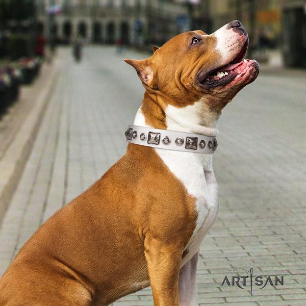 Amstaff exquisite leather dog collar with adornments for fancy walking