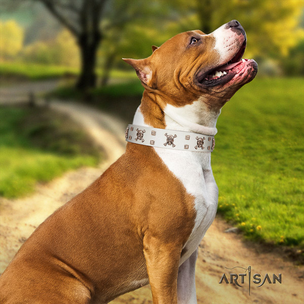 Amstaff awesome full grain genuine leather dog collar for fancy walking
