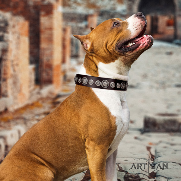 Amstaff awesome full grain leather dog collar with decorations for everyday use