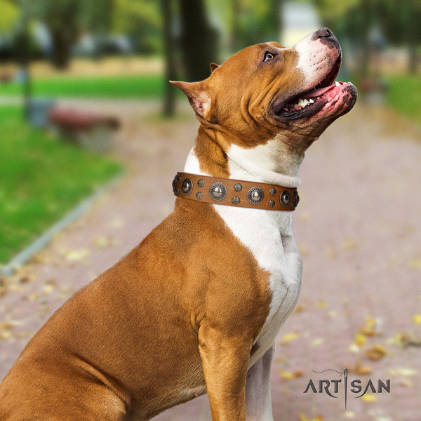 Amstaff unusual genuine leather dog collar with embellishments for basic training