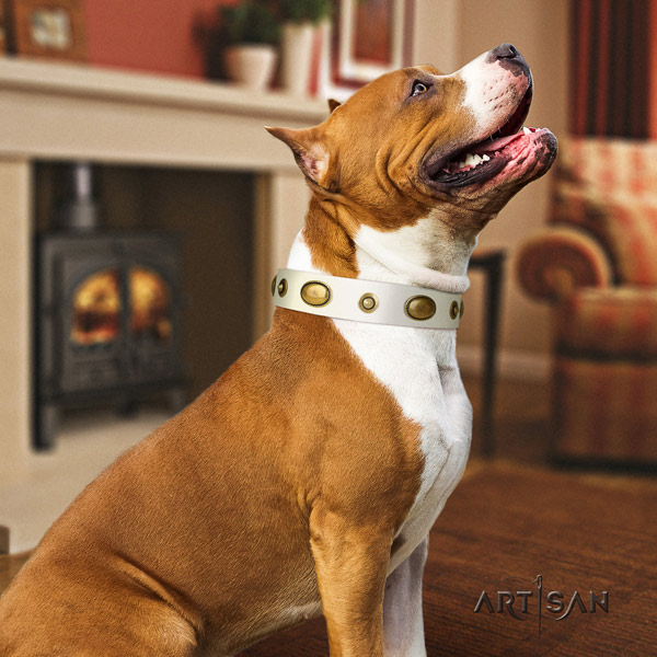 Amstaff daily walking leather dog collar with studs