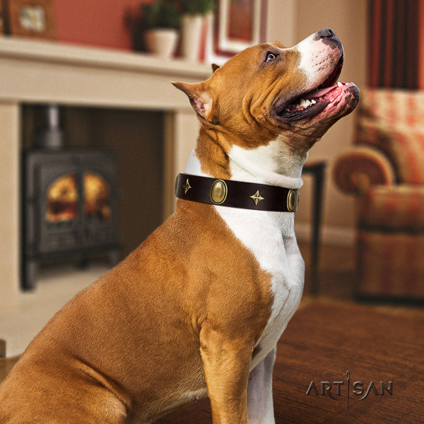 Amstaff remarkable full grain natural leather dog collar for comfortable wearing