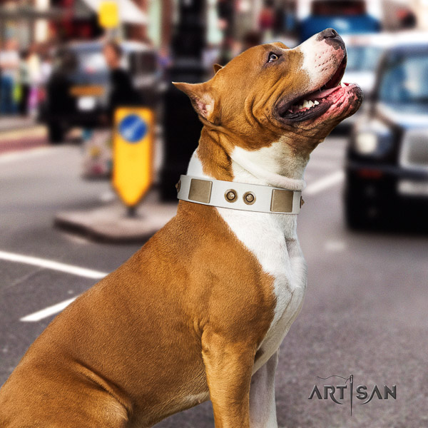 Amstaff unusual full grain genuine leather dog collar for basic training