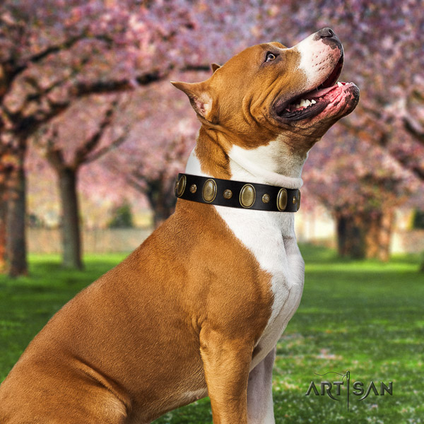 Amstaff easy to adjust full grain natural leather dog collar for daily walking