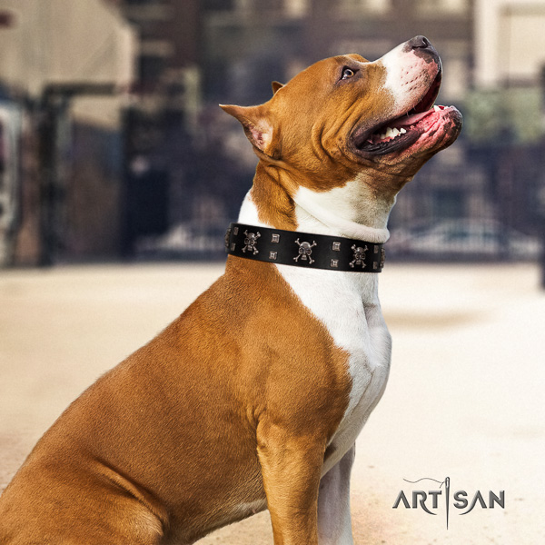 Amstaff fine quality full grain natural leather dog collar for comfy wearing