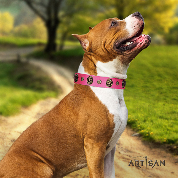 Amstaff trendy natural genuine leather dog collar for comfortable wearing