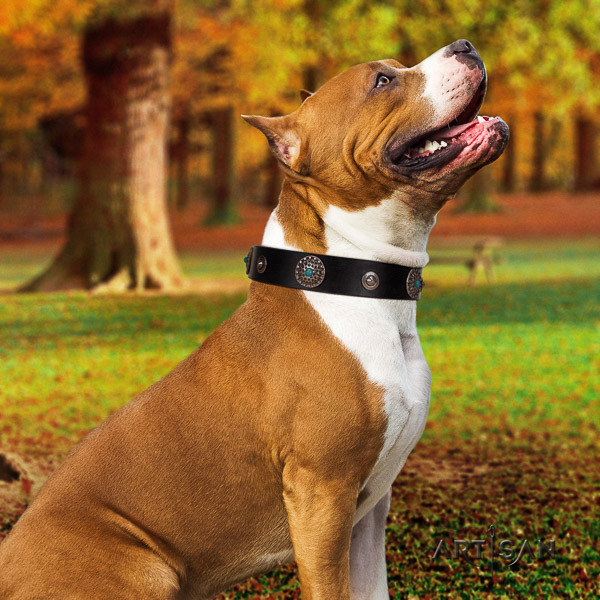 Amstaff handmade full grain genuine leather dog collar for everyday use