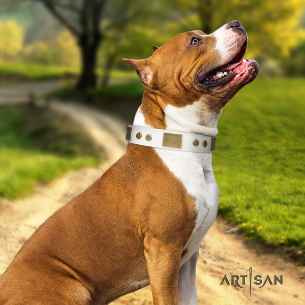 Amstaff basic training full grain genuine leather dog collar with embellishments