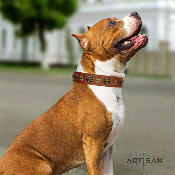 Amstaff stunning genuine leather dog collar for walking
