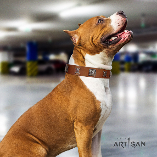 Amstaff convenient leather dog collar for comfortable wearing