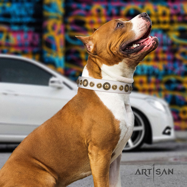 Amstaff inimitable full grain leather dog collar with embellishments for easy wearing