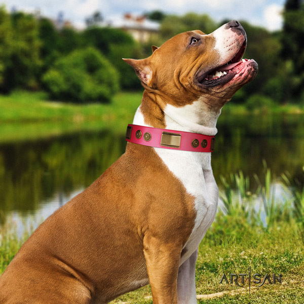 Amstaff easy wearing leather dog collar with decorations