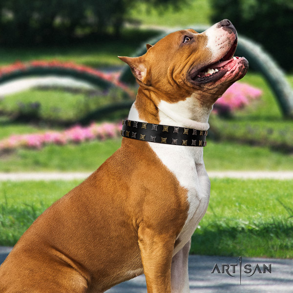 Amstaff top notch natural genuine leather dog collar for comfy wearing