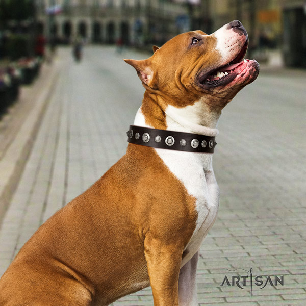 Amstaff daily use full grain natural leather dog collar with decorations