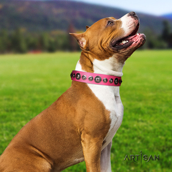 Amstaff exquisite full grain leather dog collar with decorations for easy wearing