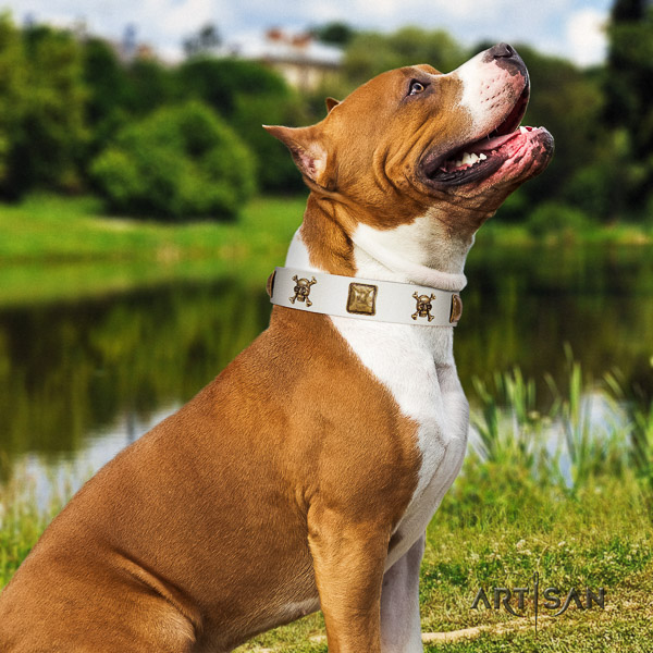 Amstaff top quality full grain natural leather dog collar for daily use