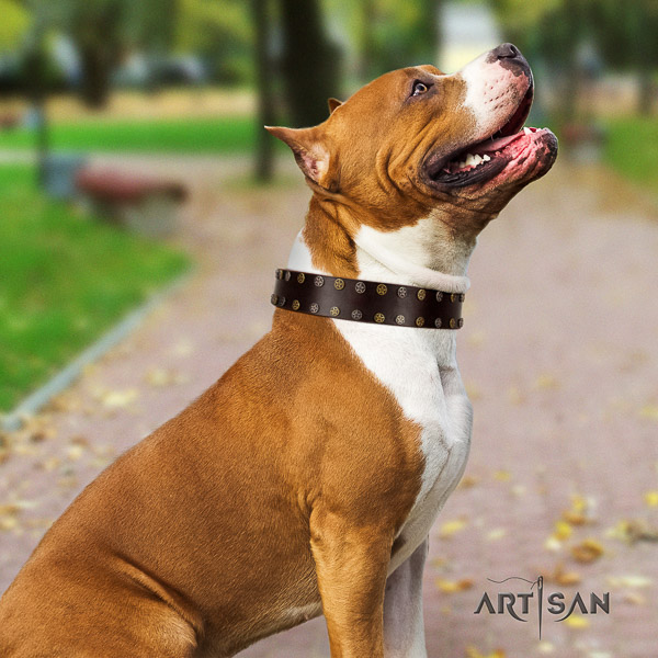 Amstaff decorated full grain genuine leather dog collar for walking