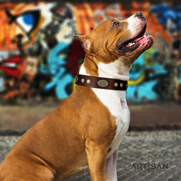 Amstaff everyday walking genuine leather dog collar with adornments