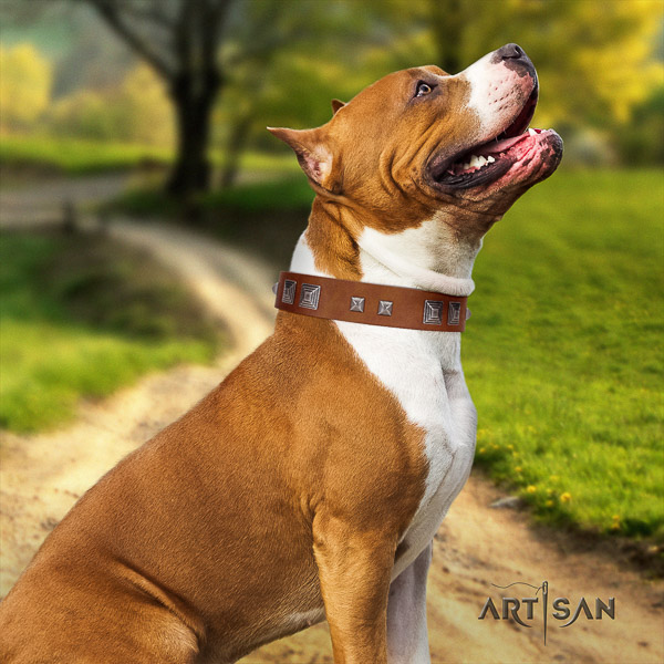 Amstaff easy adjustable full grain leather dog collar for easy wearing