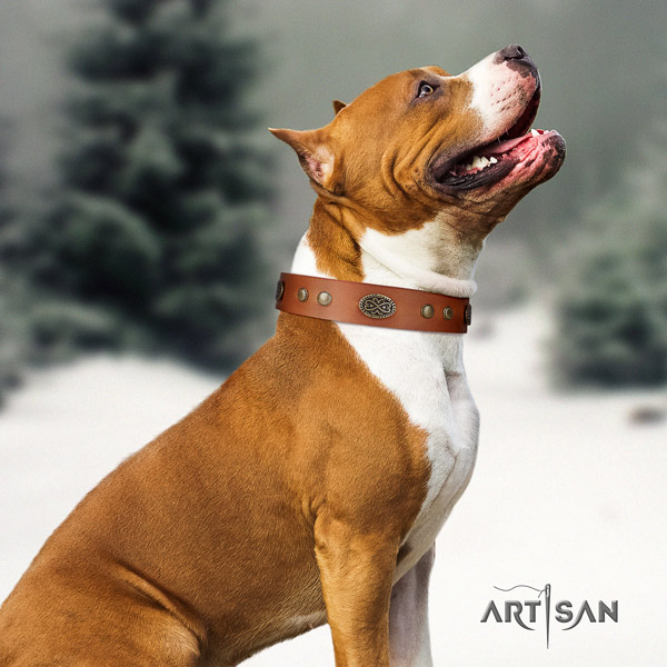 Amstaff stylish walking leather dog collar with adornments