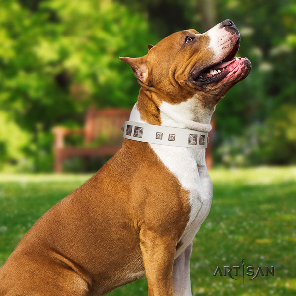 Amstaff unusual full grain leather dog collar for stylish walking