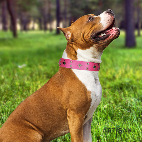 Amstaff top notch full grain natural leather dog collar for handy use