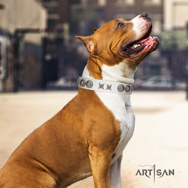 Amstaff exquisite natural genuine leather dog collar for basic training