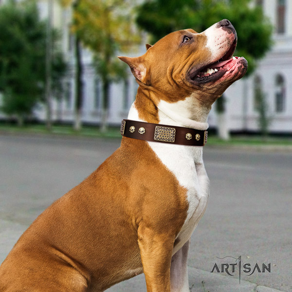 Amstaff walking full grain genuine leather dog collar with decorations