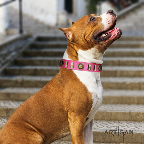 Amstaff incredible full grain genuine leather dog collar for fancy walking