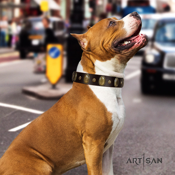Amstaff adorned full grain natural leather dog collar for everyday use