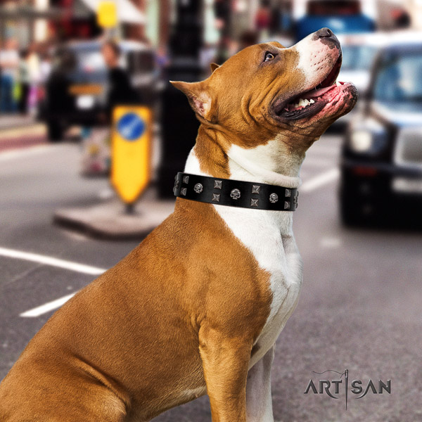 Amstaff impressive full grain genuine leather dog collar for comfy wearing