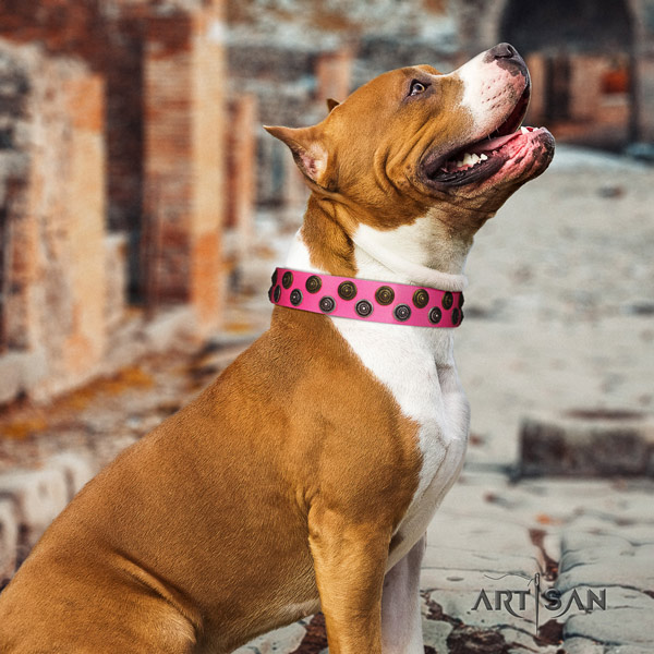 Amstaff incredible full grain leather dog collar with studs for handy use