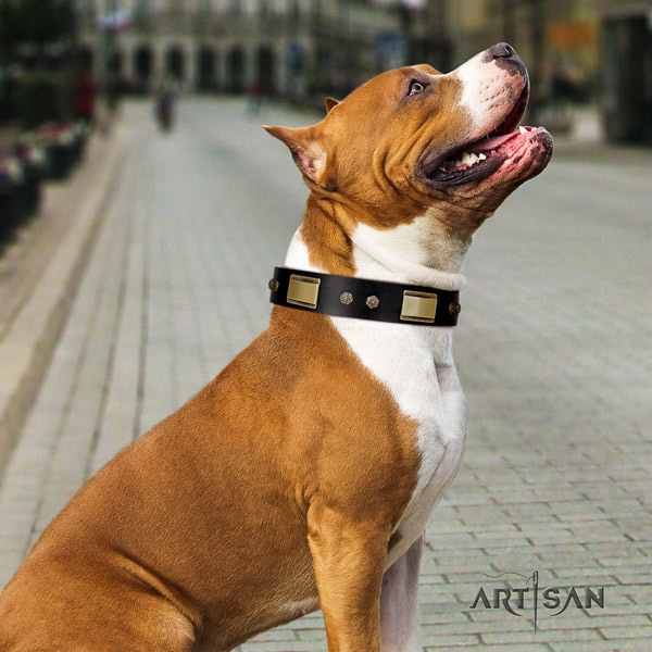 Amstaff comfy wearing natural genuine leather dog collar with decorations