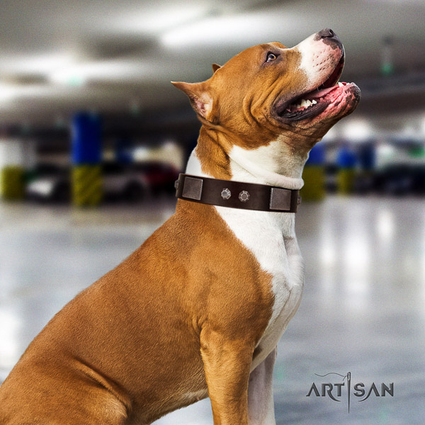 Amstaff extraordinary full grain natural leather dog collar for handy use