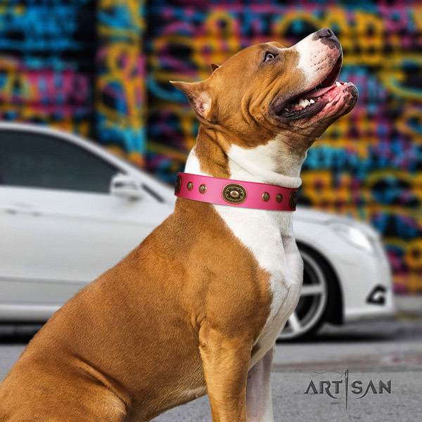 Amstaff stylish walking full grain genuine leather dog collar with adornments