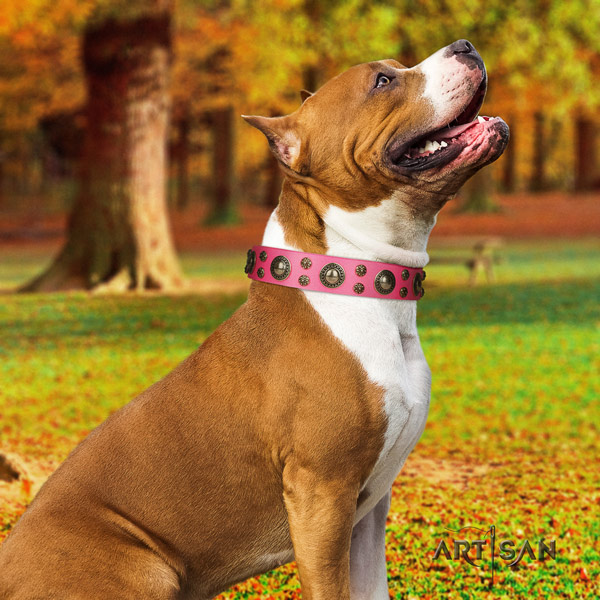 Amstaff top notch leather dog collar with adornments for easy wearing